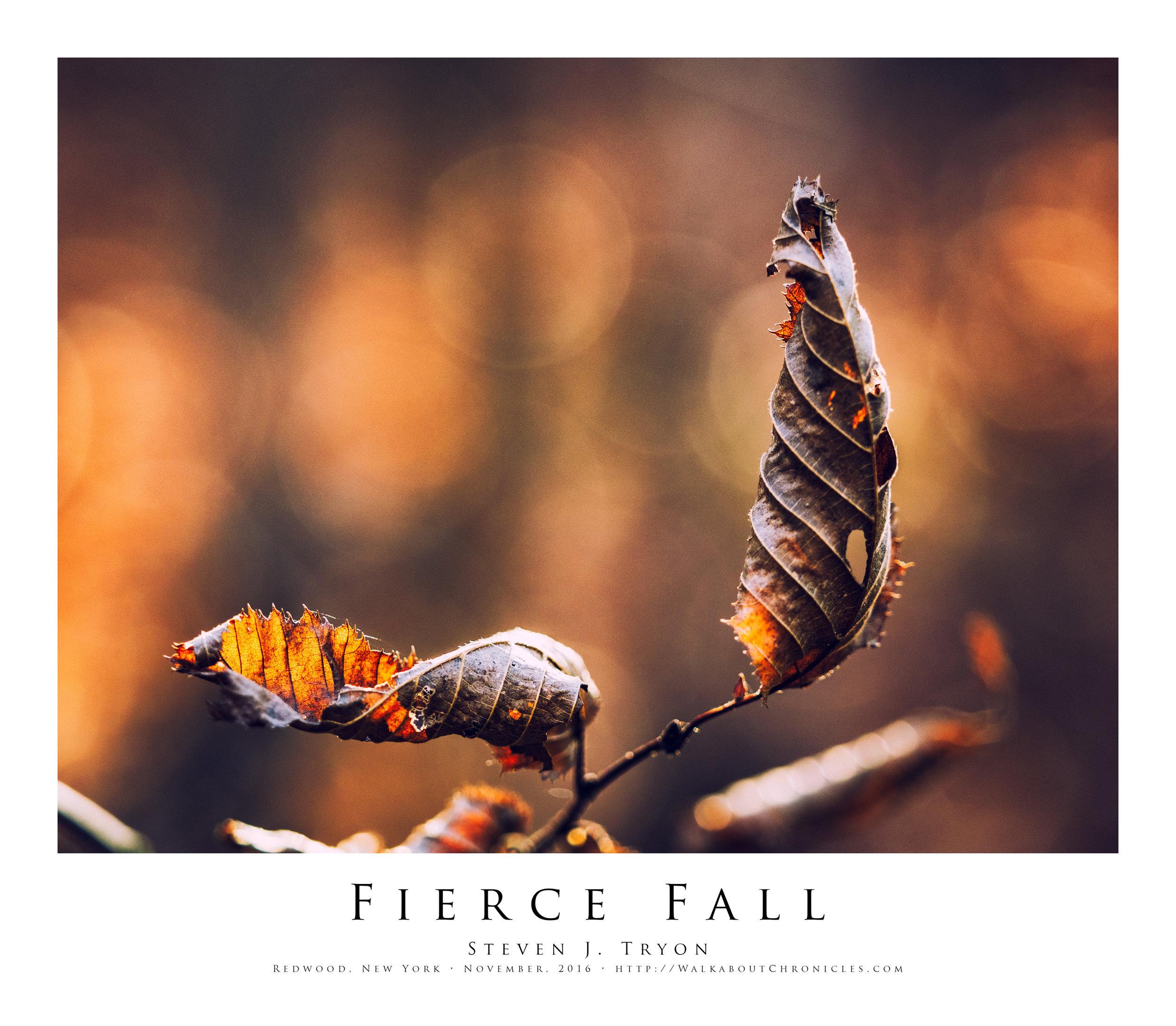Fierce Fall