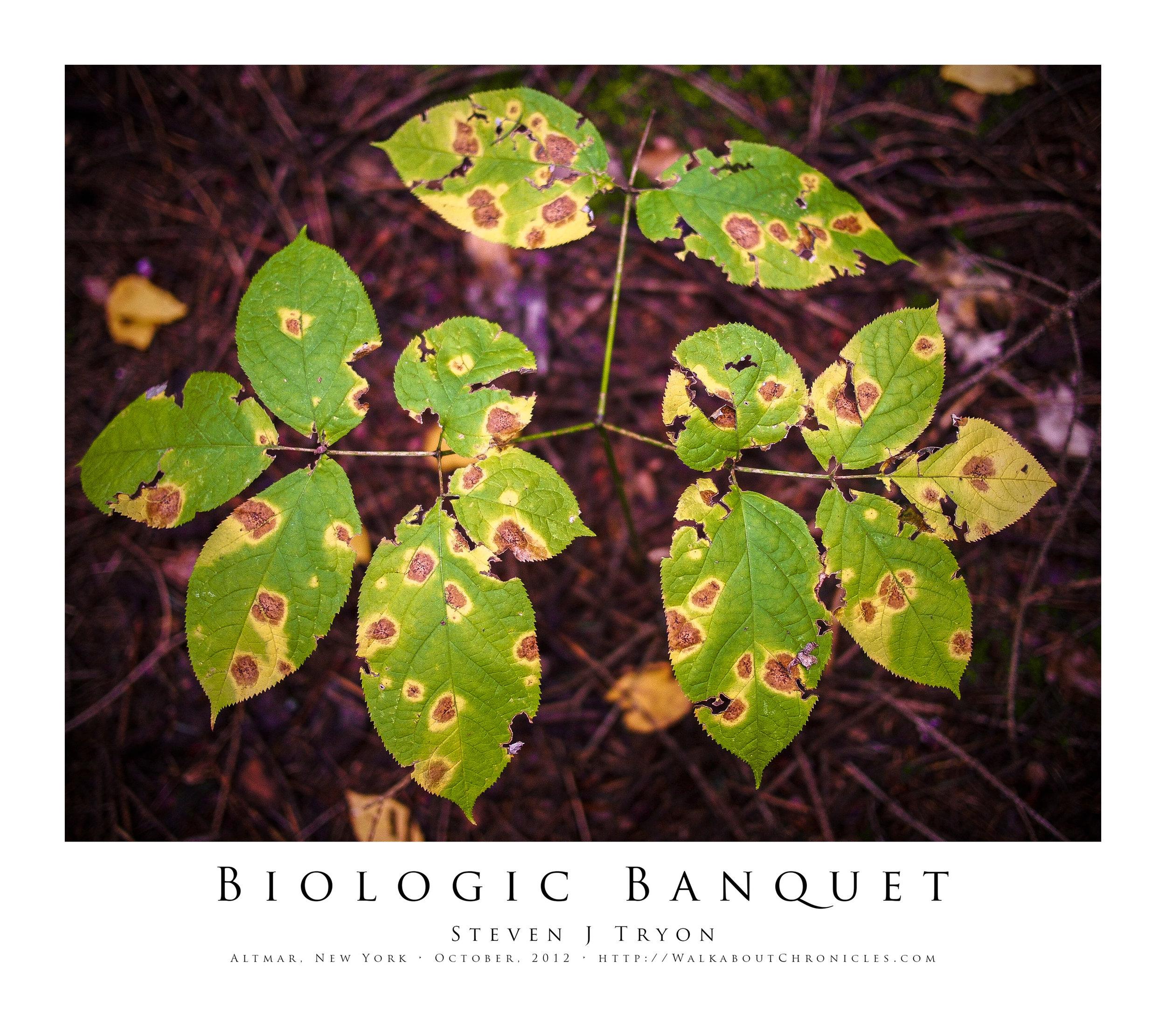 Biologic Banquet