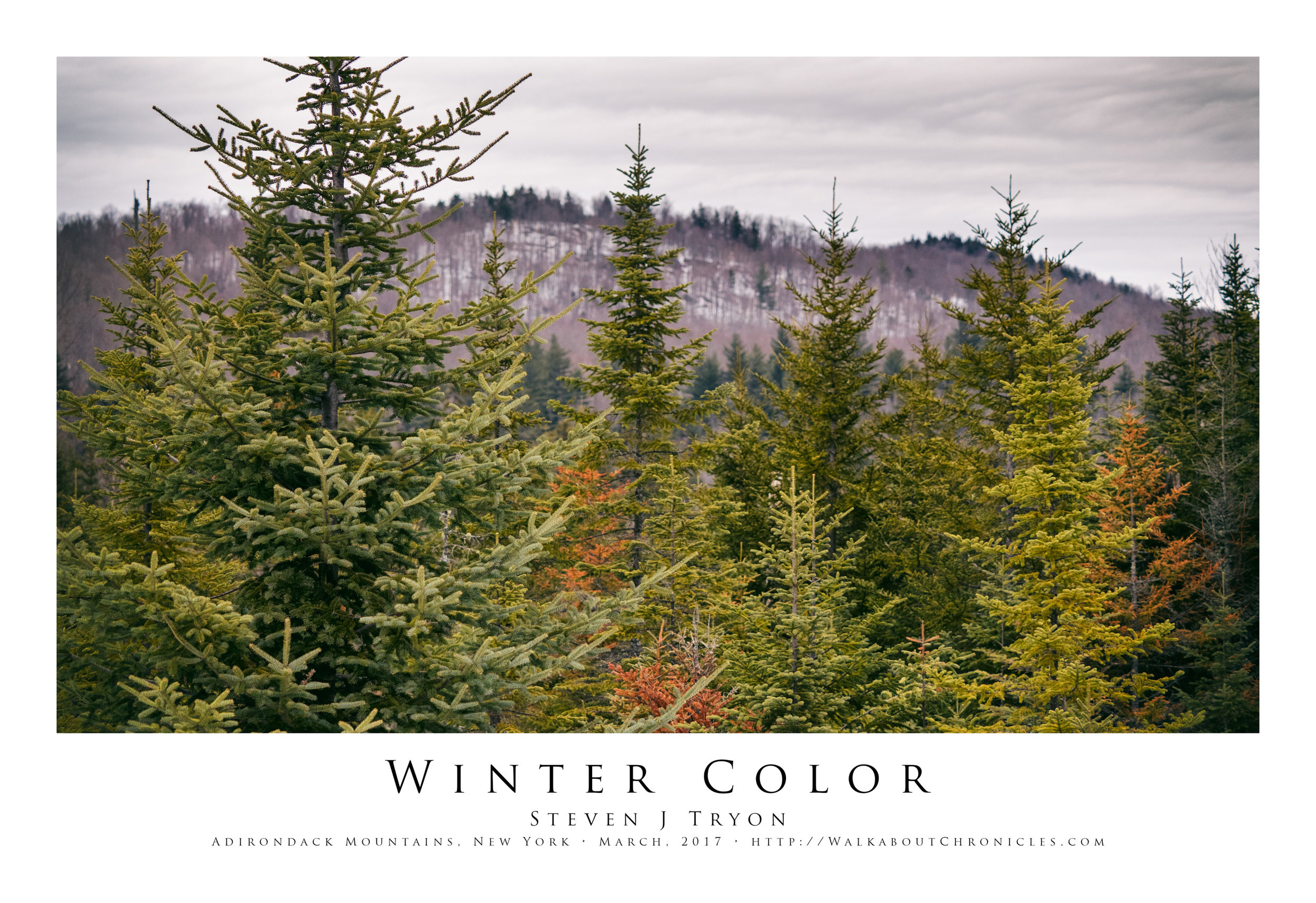 Winter Color