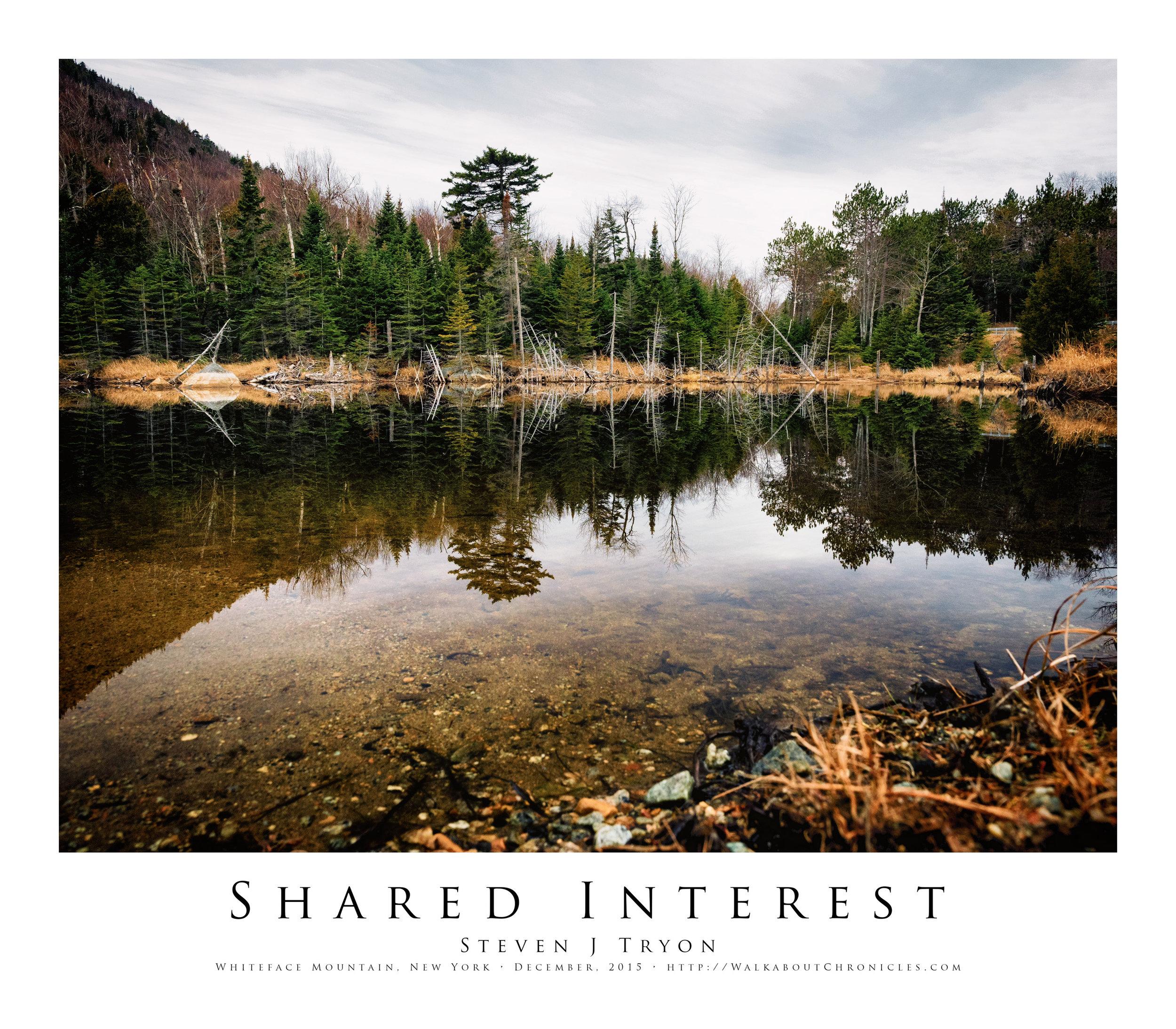 Shared Interest