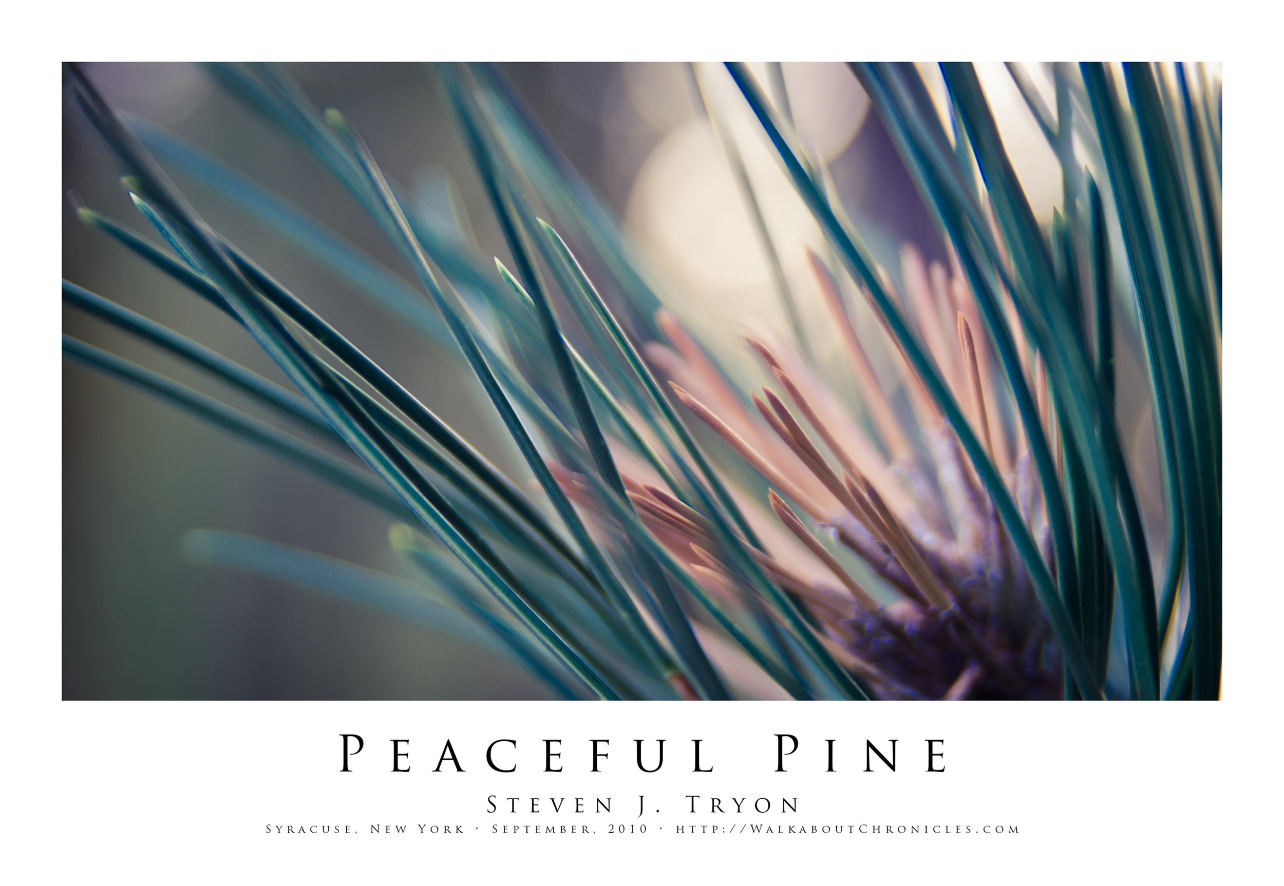 Peaceful Pine