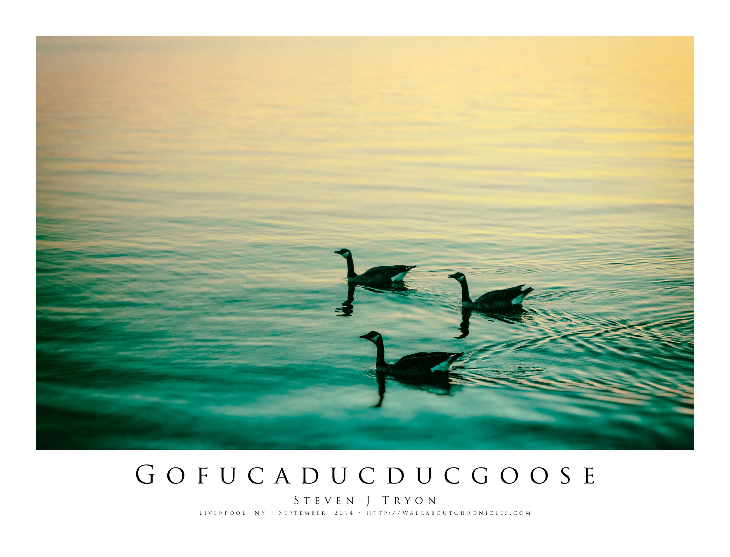 Gofucaducducgoose