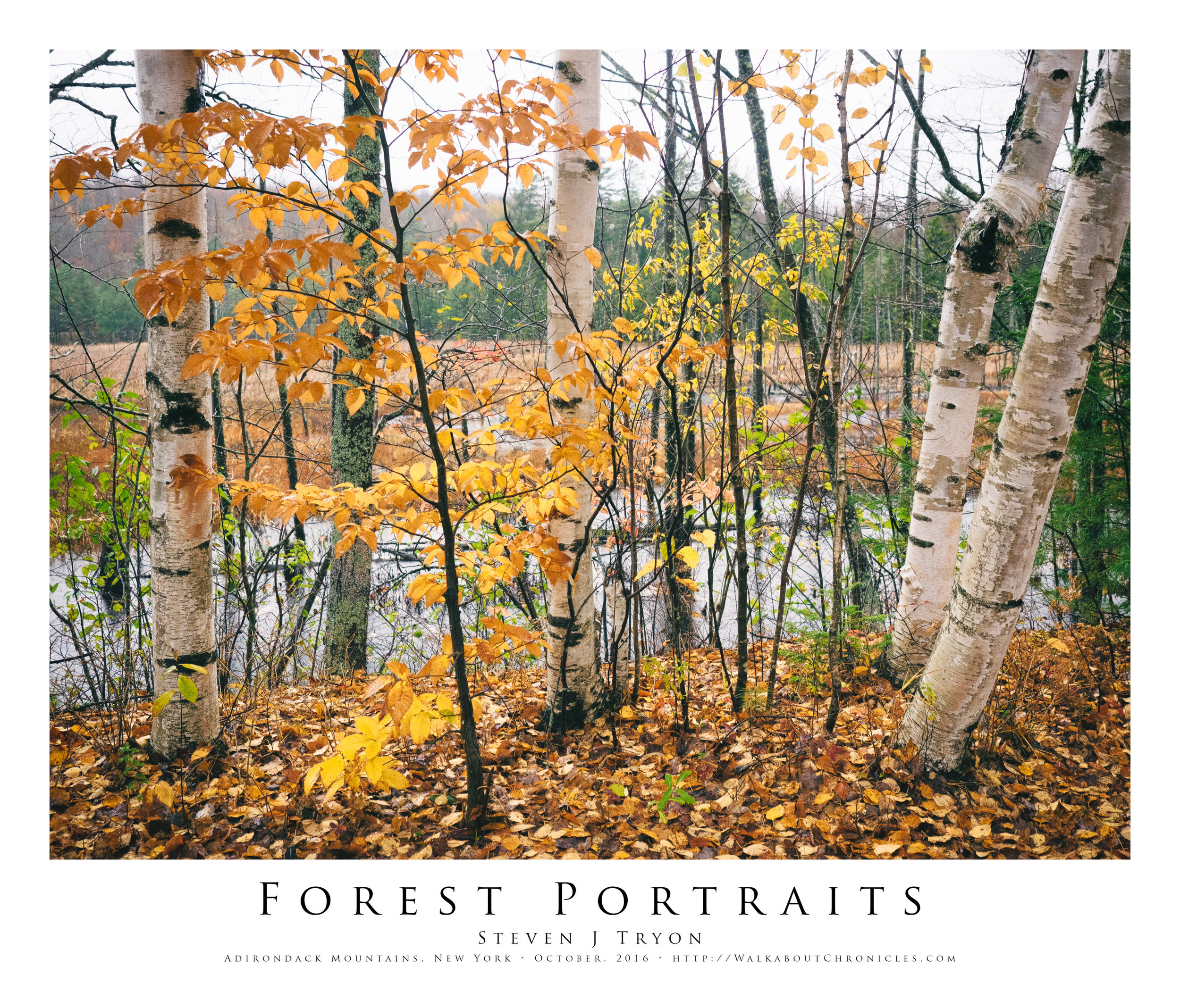 Forest Portraits