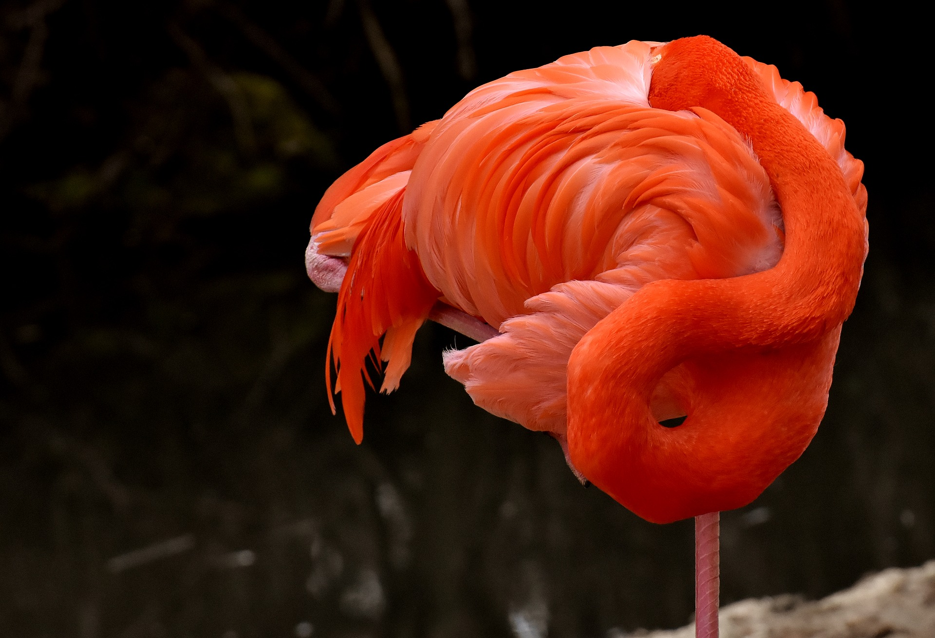 flamingo-3322280_1920.jpg