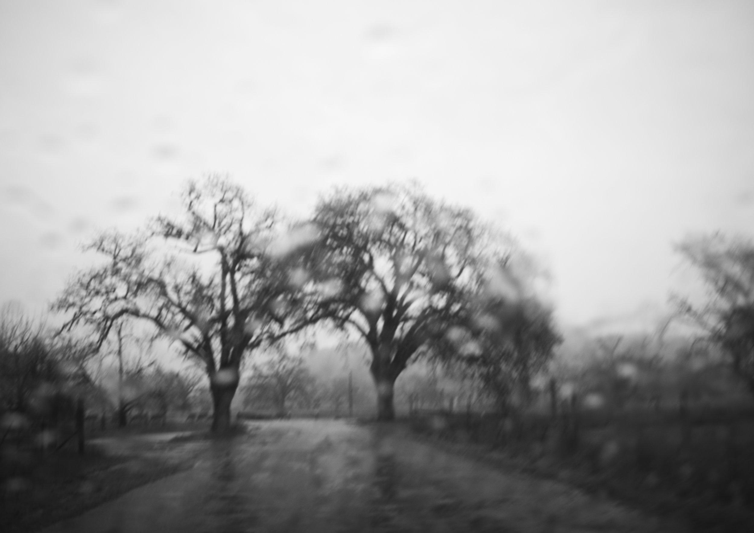 trees_1803_alt.jpg
