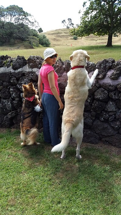 Me and dogs 2.jpg