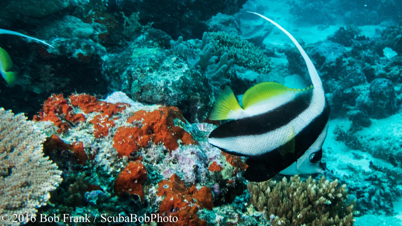 Fiji -5.jpg