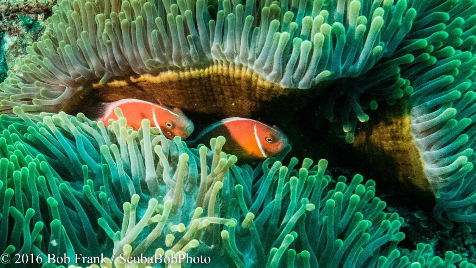 Fiji -8.jpg