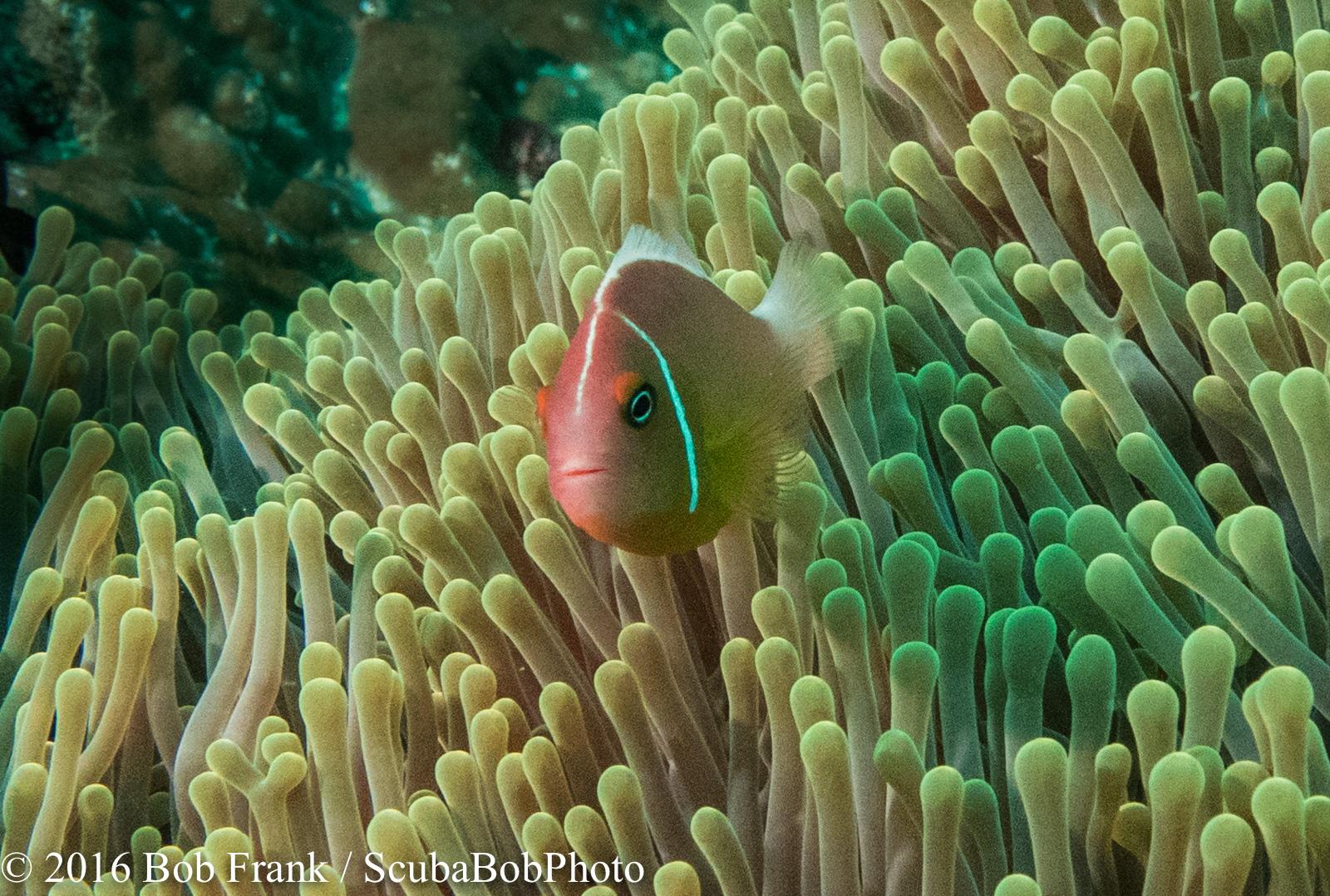 Fiji -9.jpg