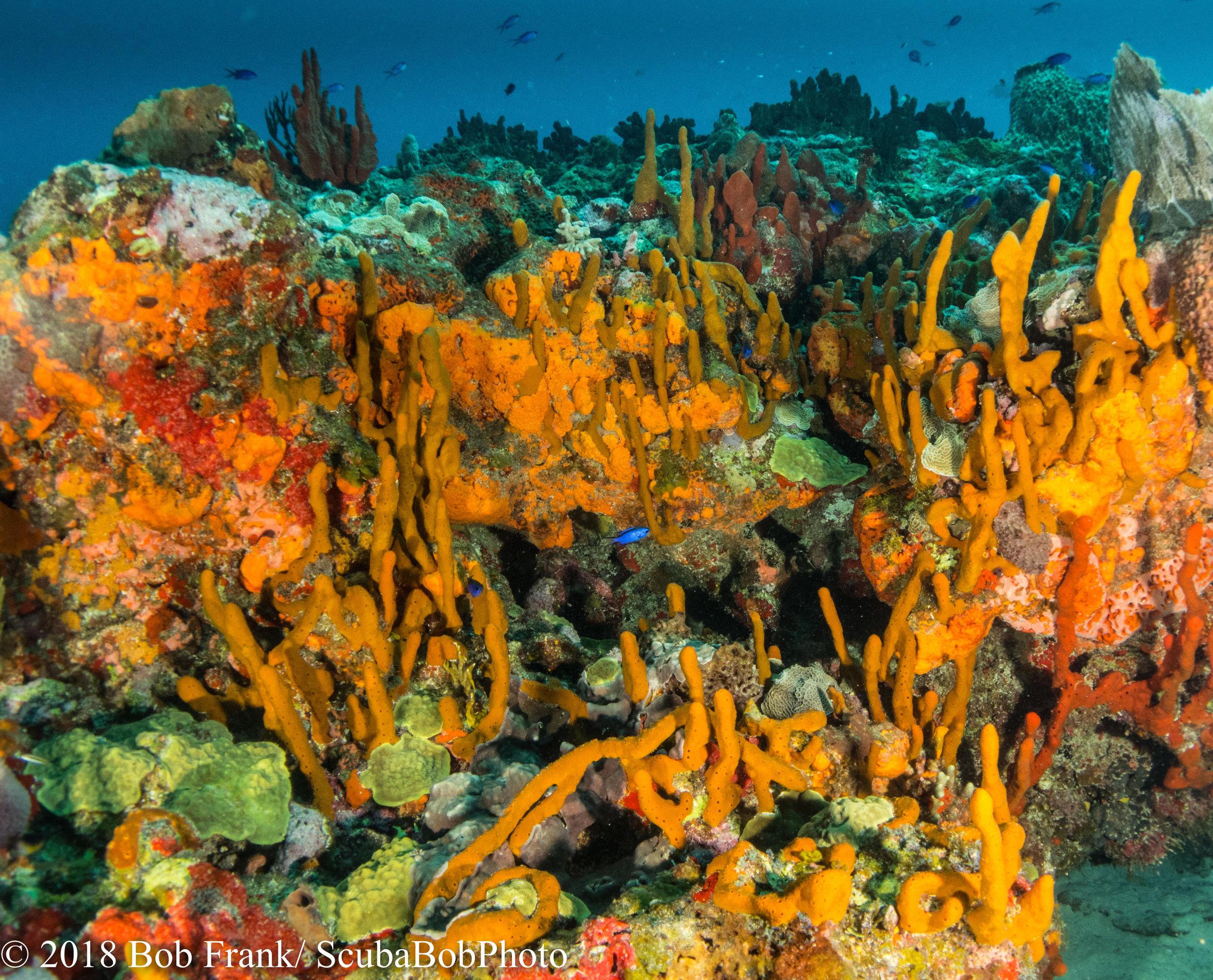 Just some pretty corals