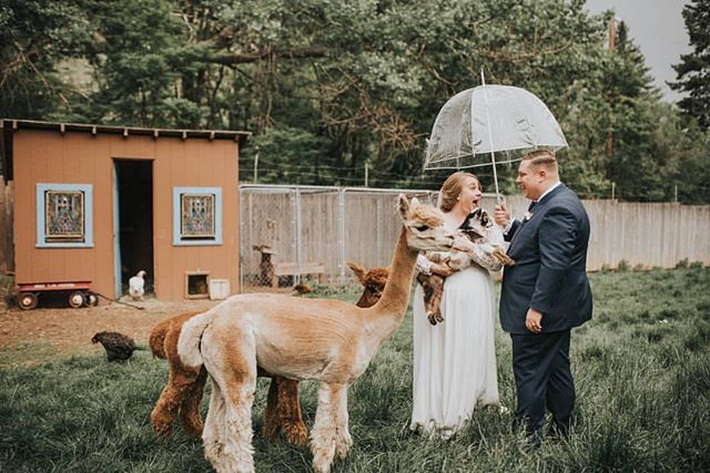 """""""You're likeSnow White!"""" he said as the animals ran up to his bride. ⠀⠀⠀⠀⠀⠀⠀⠀⠀⠀⠀⠀ ⠀⠀⠀⠀⠀⠀⠀⠀⠀⠀⠀⠀ THIS is one of those perfect, candid moments that I absolutely live for! I had so much fun capturing Daniel and Sharon's wedding day. ♡ .⠀⠀⠀⠀⠀⠀⠀⠀⠀⠀⠀⠀ .⠀⠀⠀⠀⠀⠀⠀⠀⠀⠀⠀⠀ .⠀⠀⠀⠀⠀⠀⠀⠀⠀⠀⠀⠀ Dress shop: @aandbe_denver  Dress designer: @rebeccaschoneveld_bridal  Suit designer: @bespokeedge Caterer & bar service: @mountain_crust Ice Cream: Fior di Latte Cake: @cakehag  Tables: Harvest Tables Arch: @plumeandfurrow  Florals: bridesmaids @lexa_fish Planner: Kayla at @dahliaeventslyons Hair: @fluffbar Wines: @callunavineyards Beer: @newbelgium Cider: picked, crushed, and made by the bride & groom Guest gifts and farmstand treats: made by the bride & groom Couple: @cakehag @dukegush"""