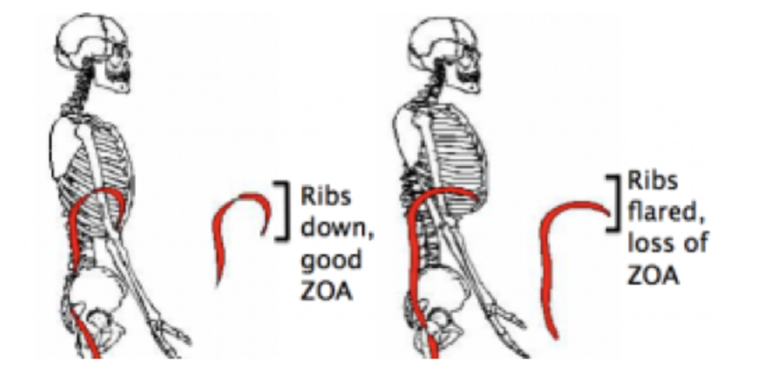 The Postural Restoration Institute's teachings are centred around creating a strong ZOA.