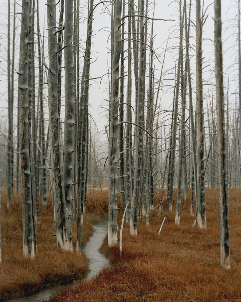Enchantment ,  Archival Pigment Print, 20x16 inches (Edition of 5)   & 40x32 inches   (Edition of 3)