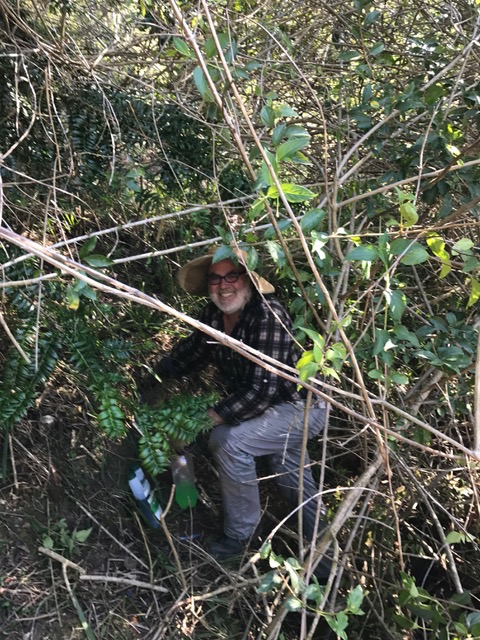 Paul clearing lantana in the gully
