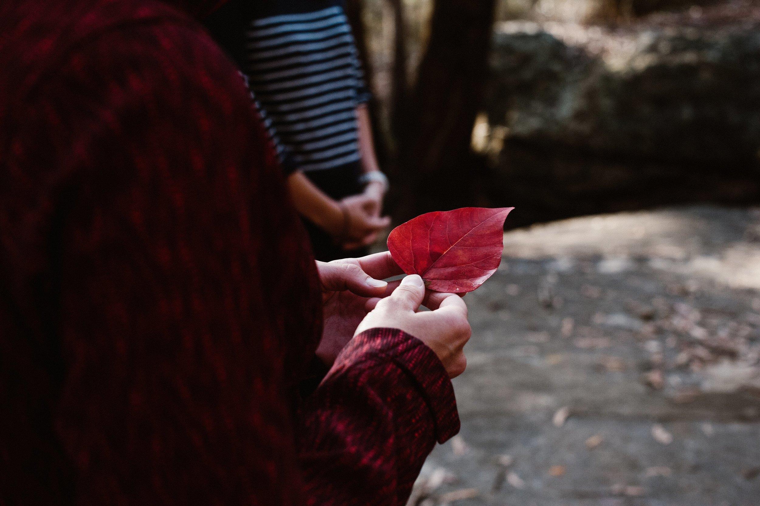 red leaf .jpg