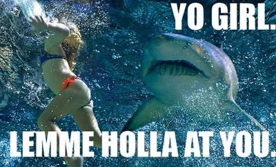 43-shark-memes-shark-week--large-msg-131232915088