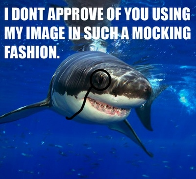 43-shark-memes-shark-week--large-msg-13123291524