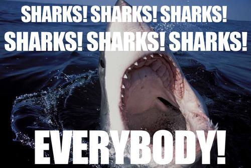 43-shark-memes-shark-week--large-msg-131232916928