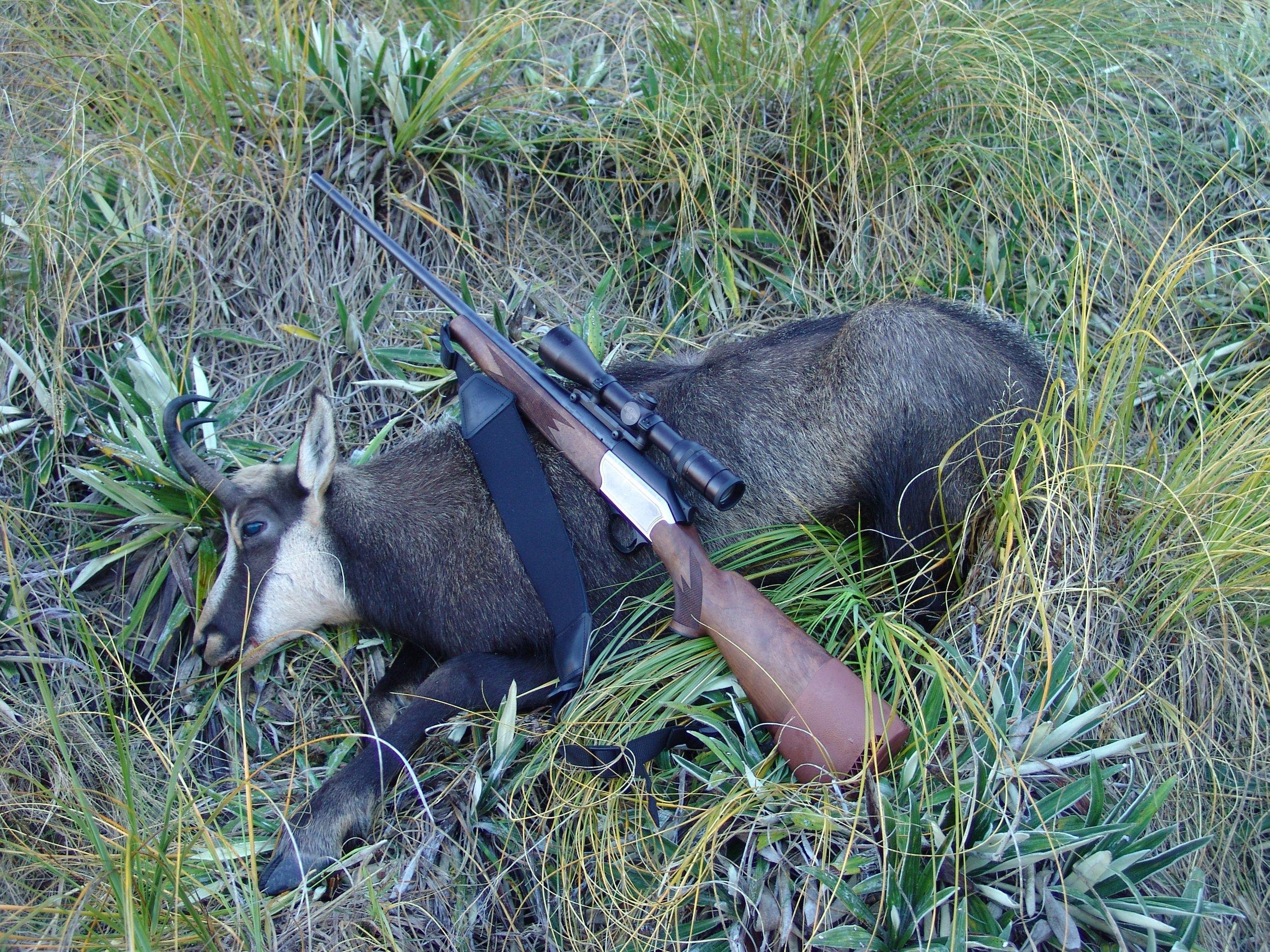 New Zealand alpine Chamois - rifle 7mm mag Blaser