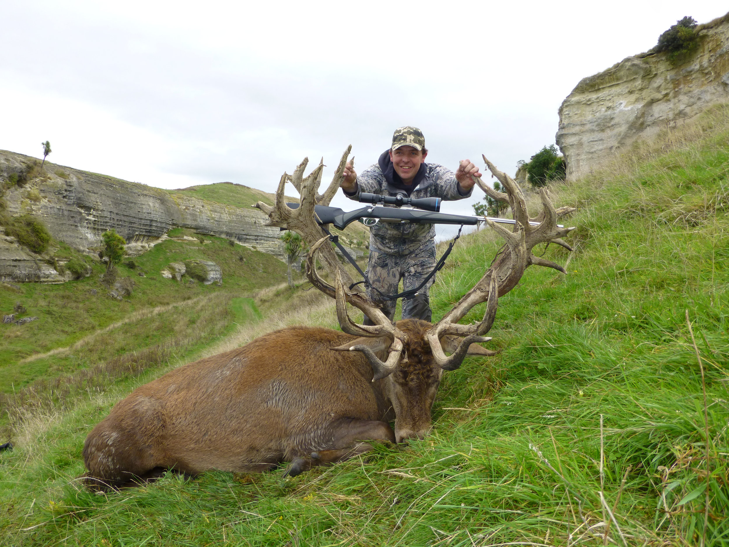 High grade Red Stag