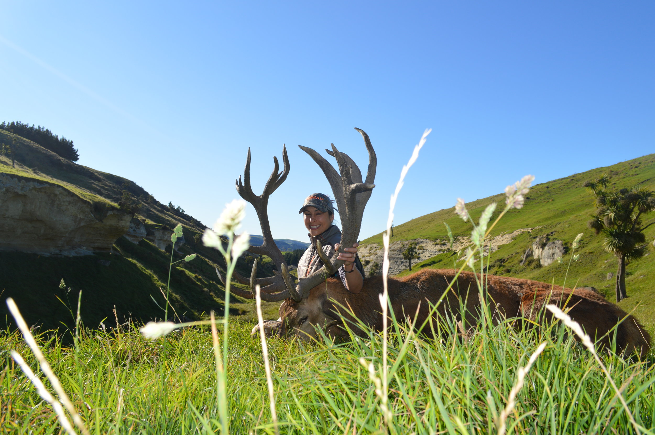 Stag hunts
