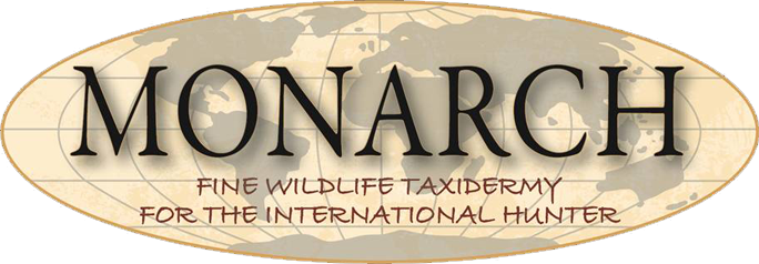 Monarch Taxidermy is based in Helena, Montana and does work of the highest international quality.