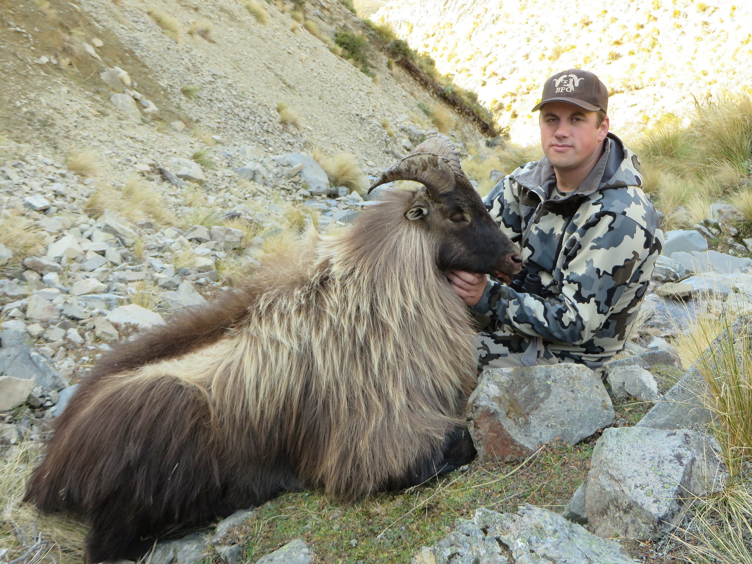 One of the best free range trophy Himalayan bull Tahr we have taken over the years - Jeremy Manning of Canada (hunter)