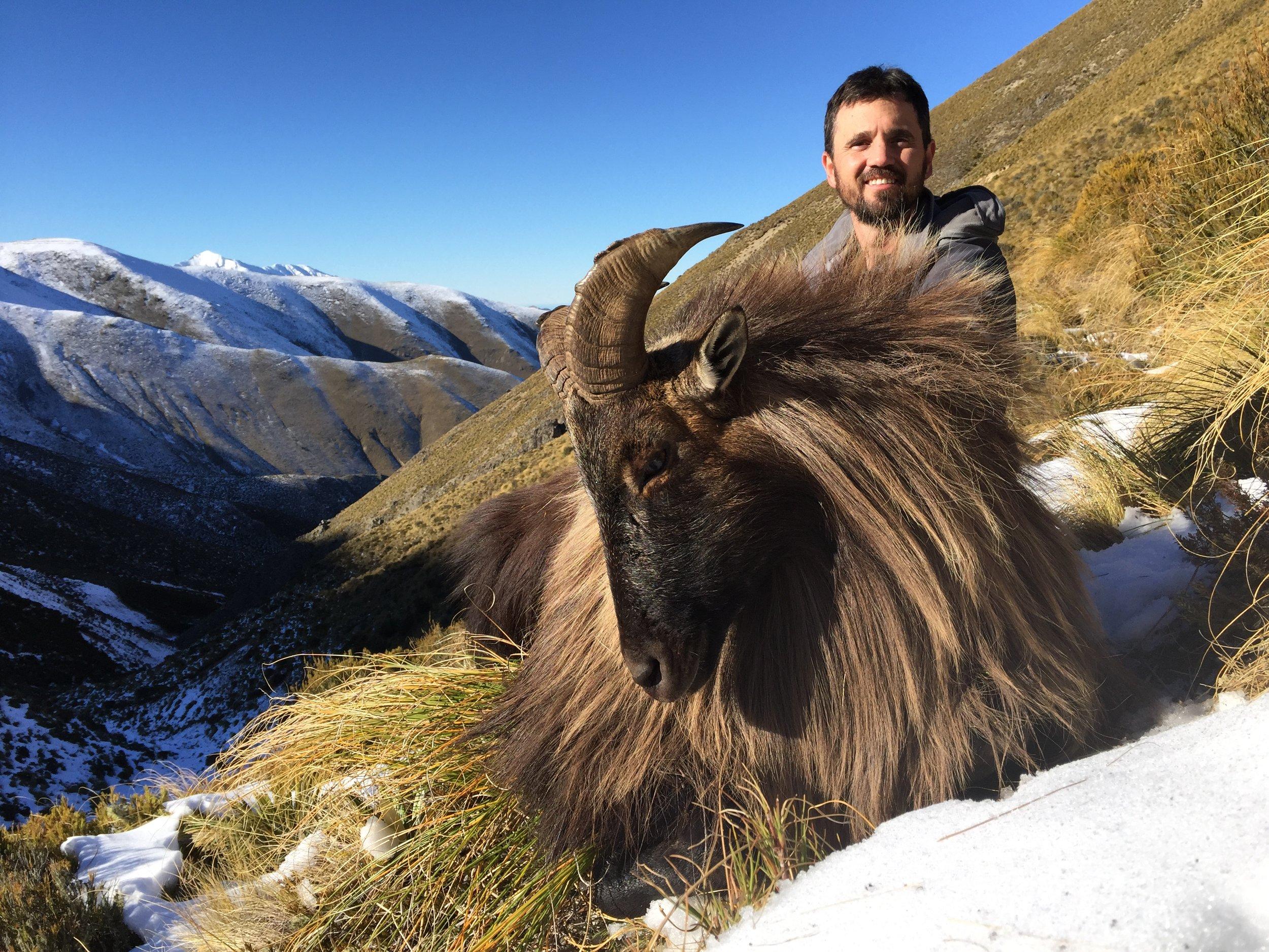 Stuart Farnsworth, master taxidermist & co-owner of Monarch Taxidermy, Montana. Stuart's trophy bull Tahr taken on a foot hunt with us.