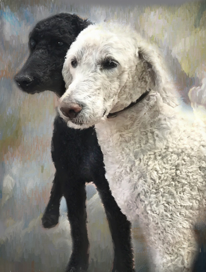 Sparkie, the white twin brother to black Bingo, drowned in a icy pond chasing ducks December 2017. His passing has crystalized some notions of how Qigong self-observbation practices can work with the step based Recovery process to help with working through grief.