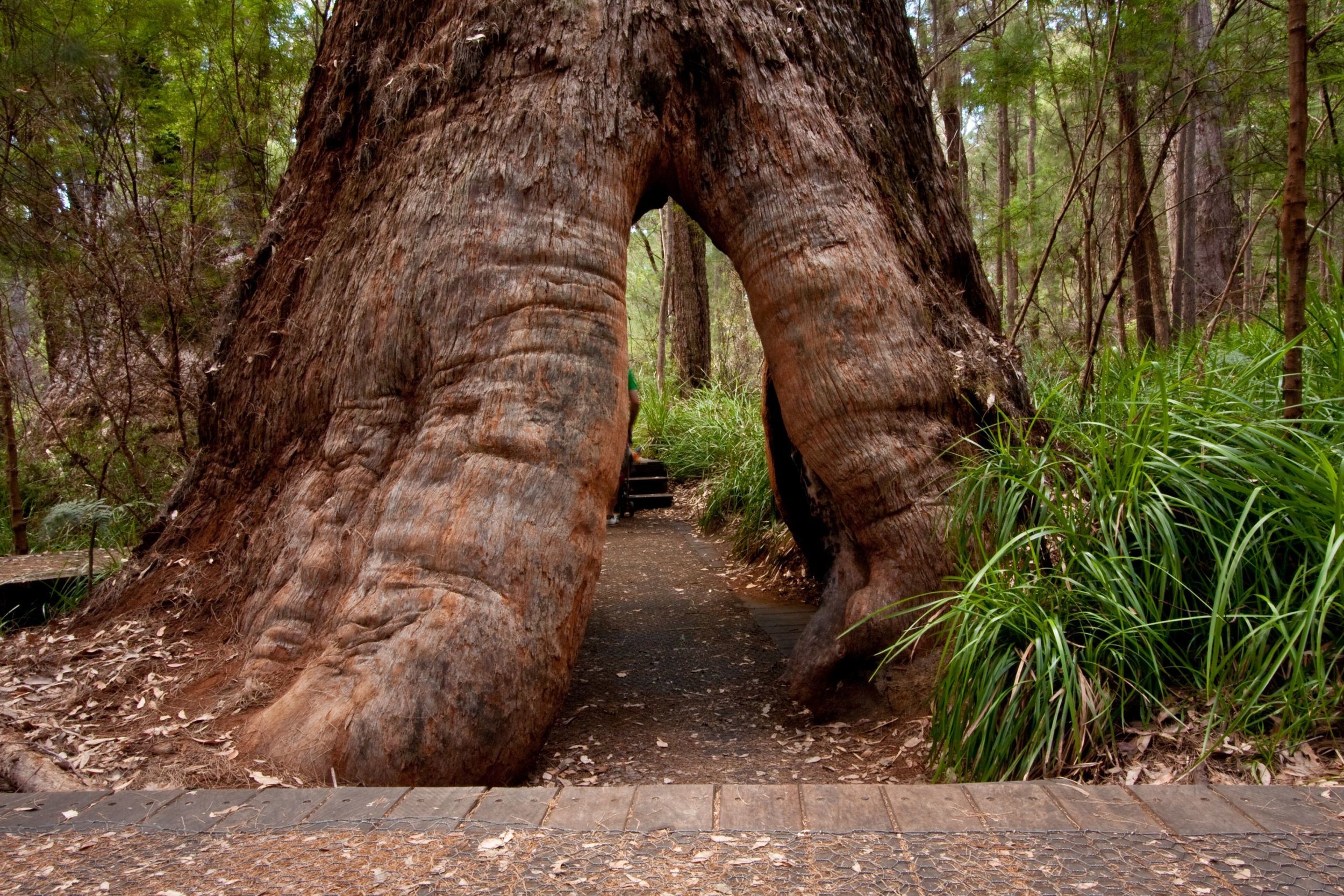 Valley of the Giants.jpg