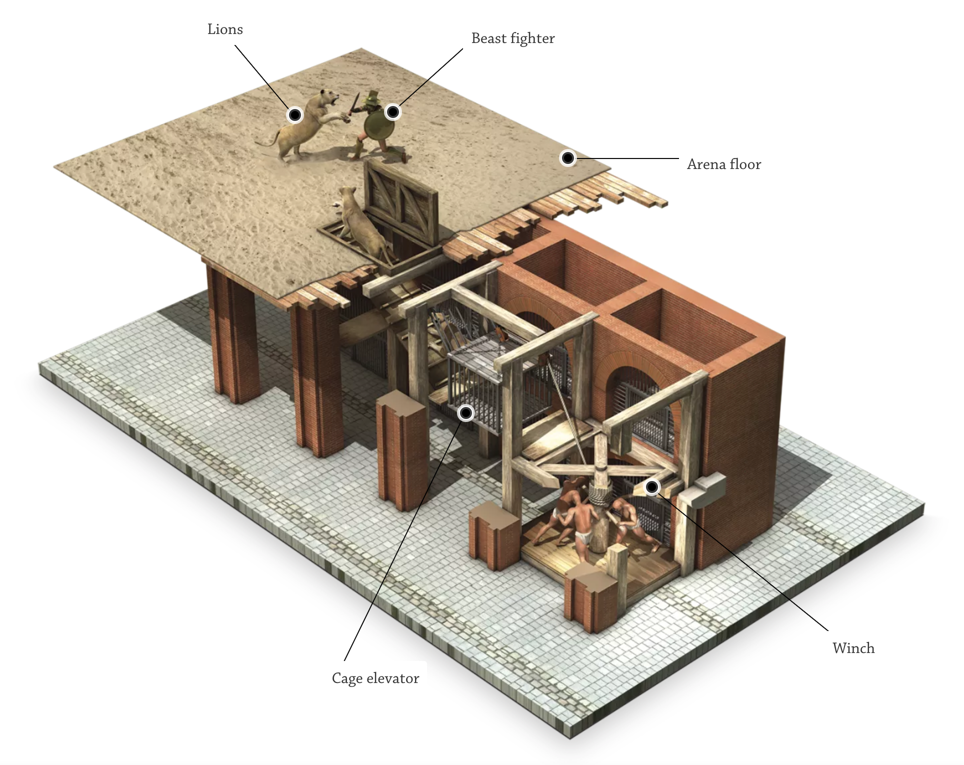 The elevator system is powered by eight men on two decks who turn a huge wooden shaft connected by a series of ropes, pulleys and lead weights to a wooden cage capable of holding more than 600 pounds. The manpower slowly raises the cage to the arena floor where the trap door opens.