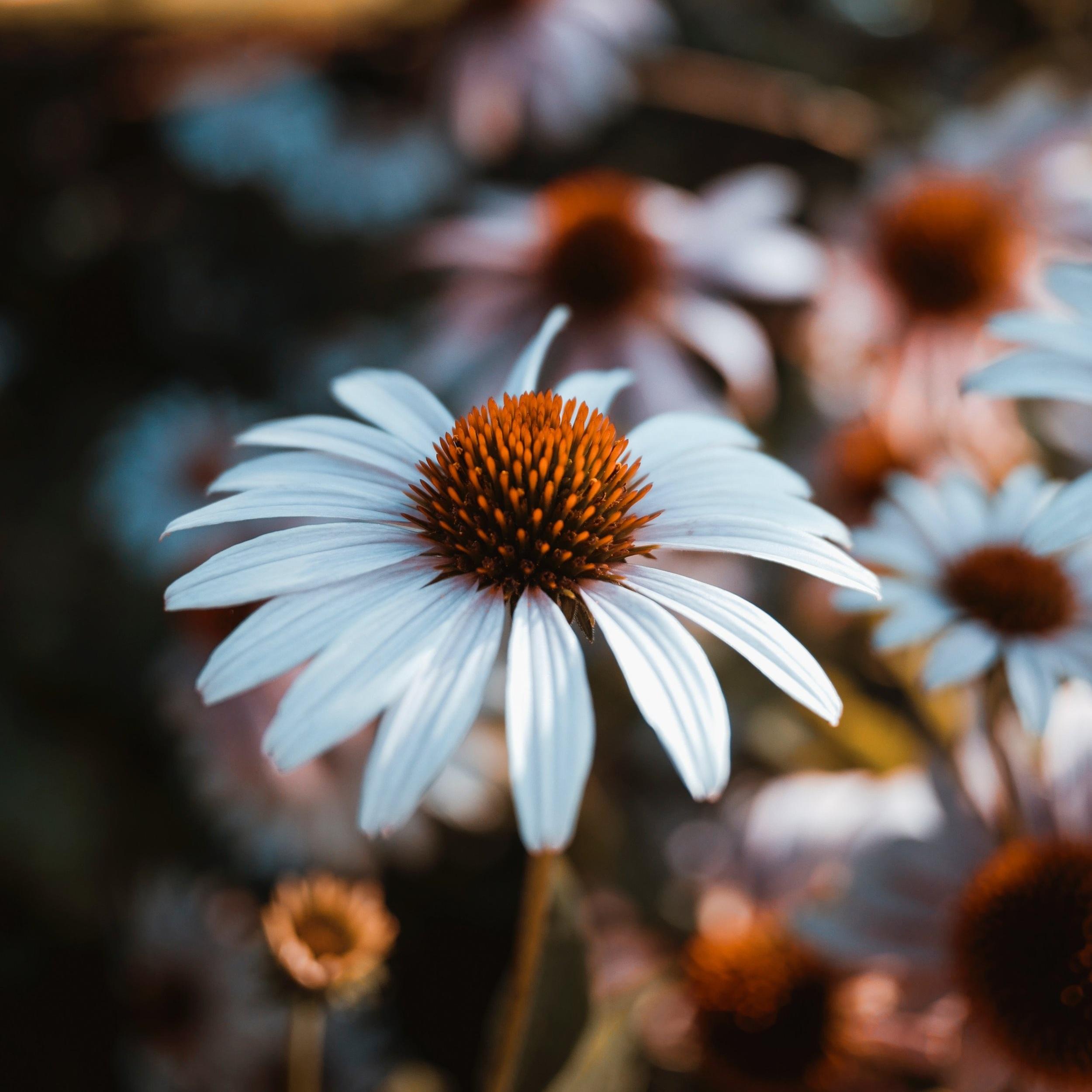 Flower+soul.jpg