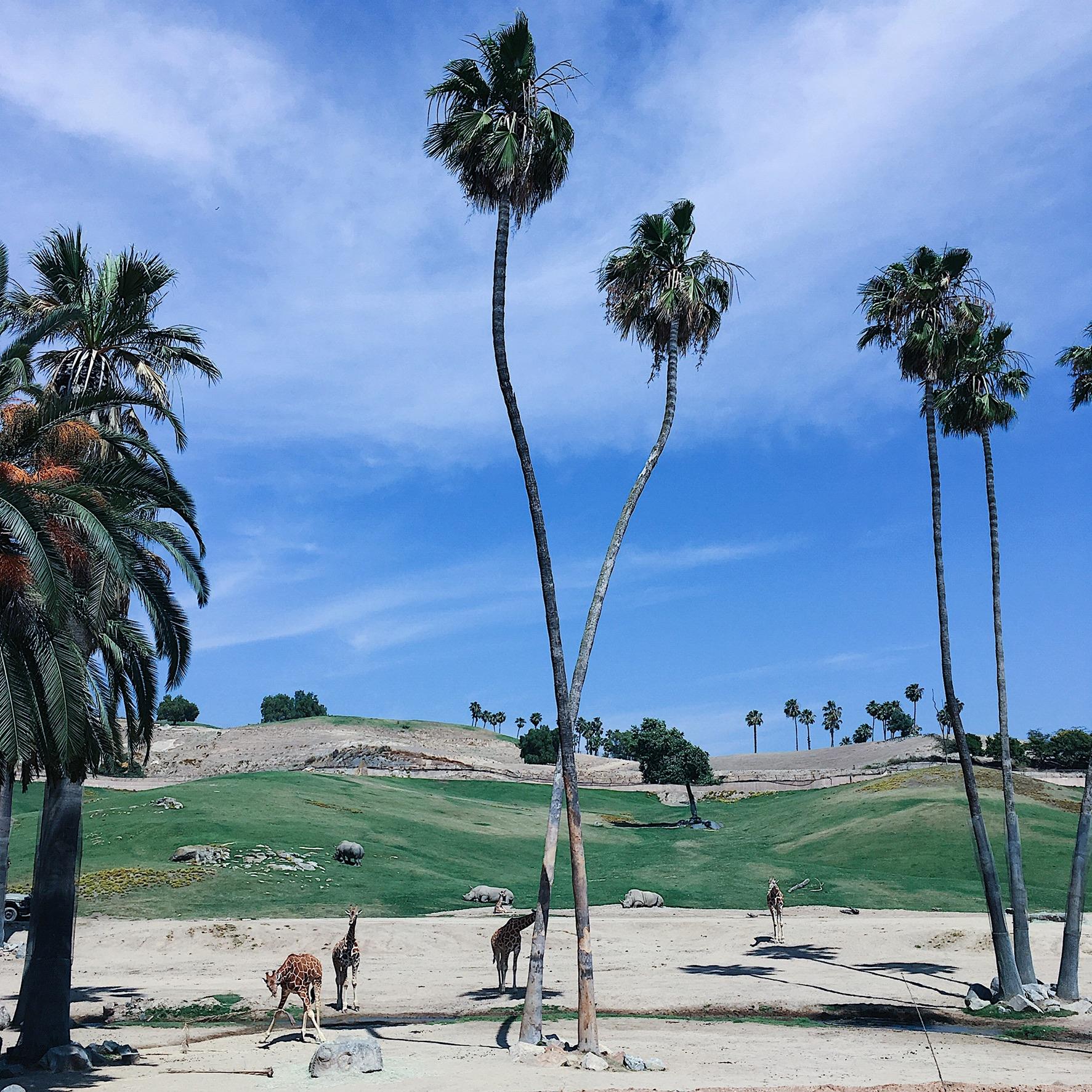 KarlaBeeTravels_San_Diego_Safari2JPG