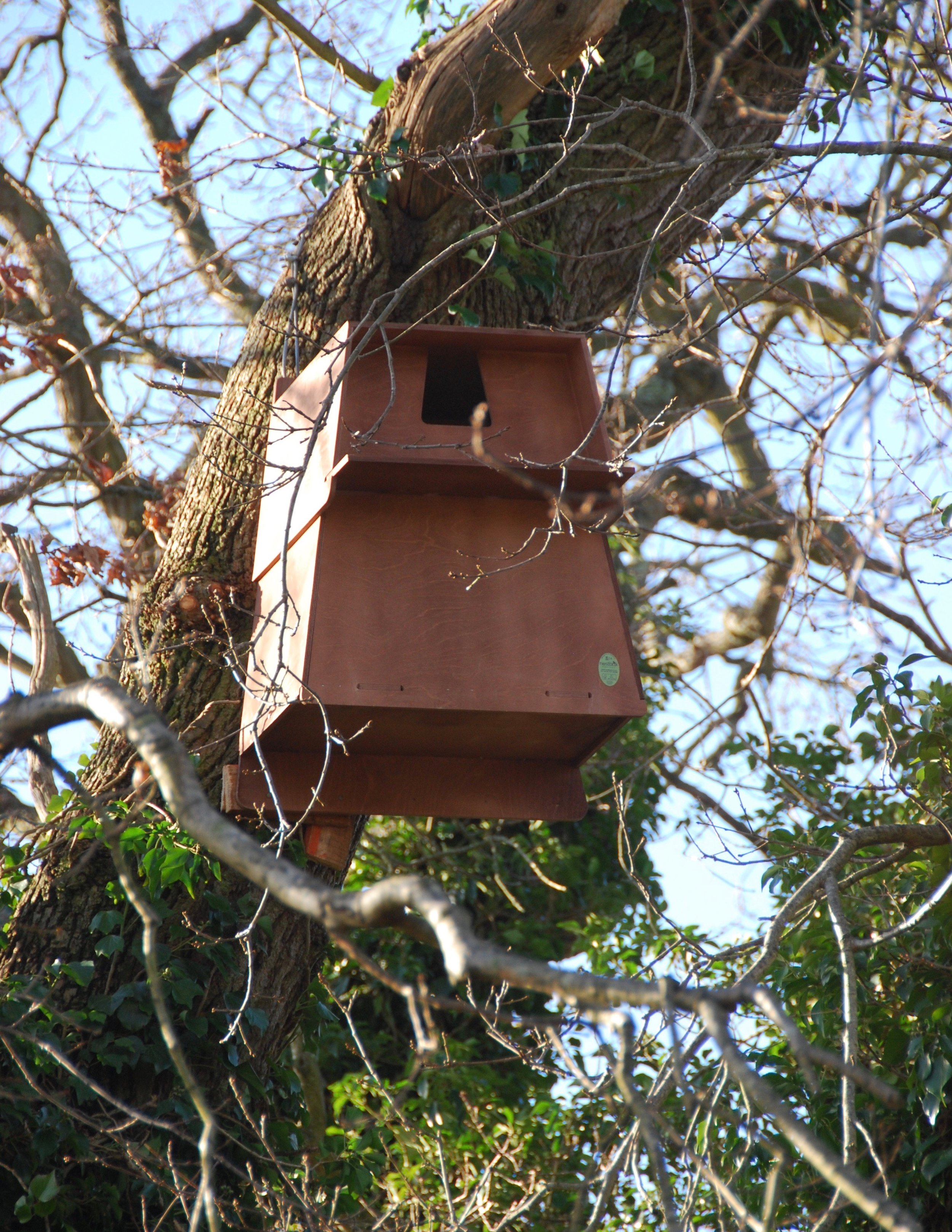 Owl box close up.jpg