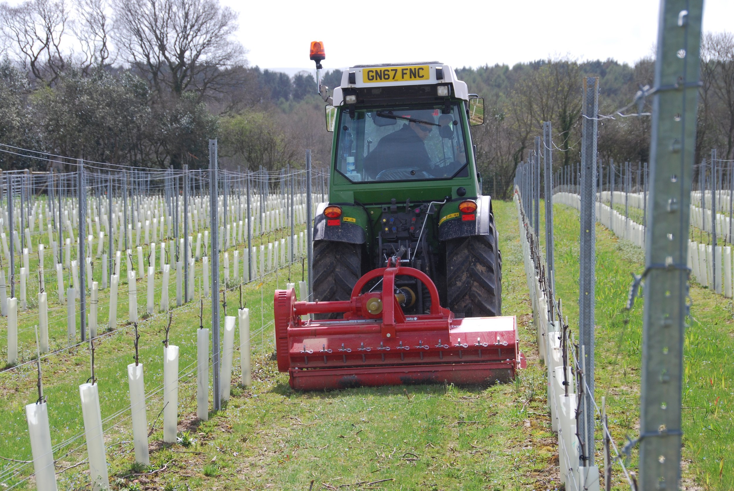 Now that the ground is dry enough we've been out flailing the winter prunings and mowing the aisles and headlands.