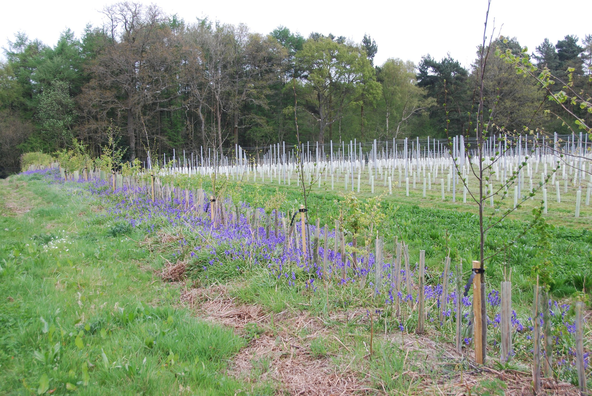 We have planted natural windbreaks on the boundaries of several fields which will help to minimise wind damage to vines.