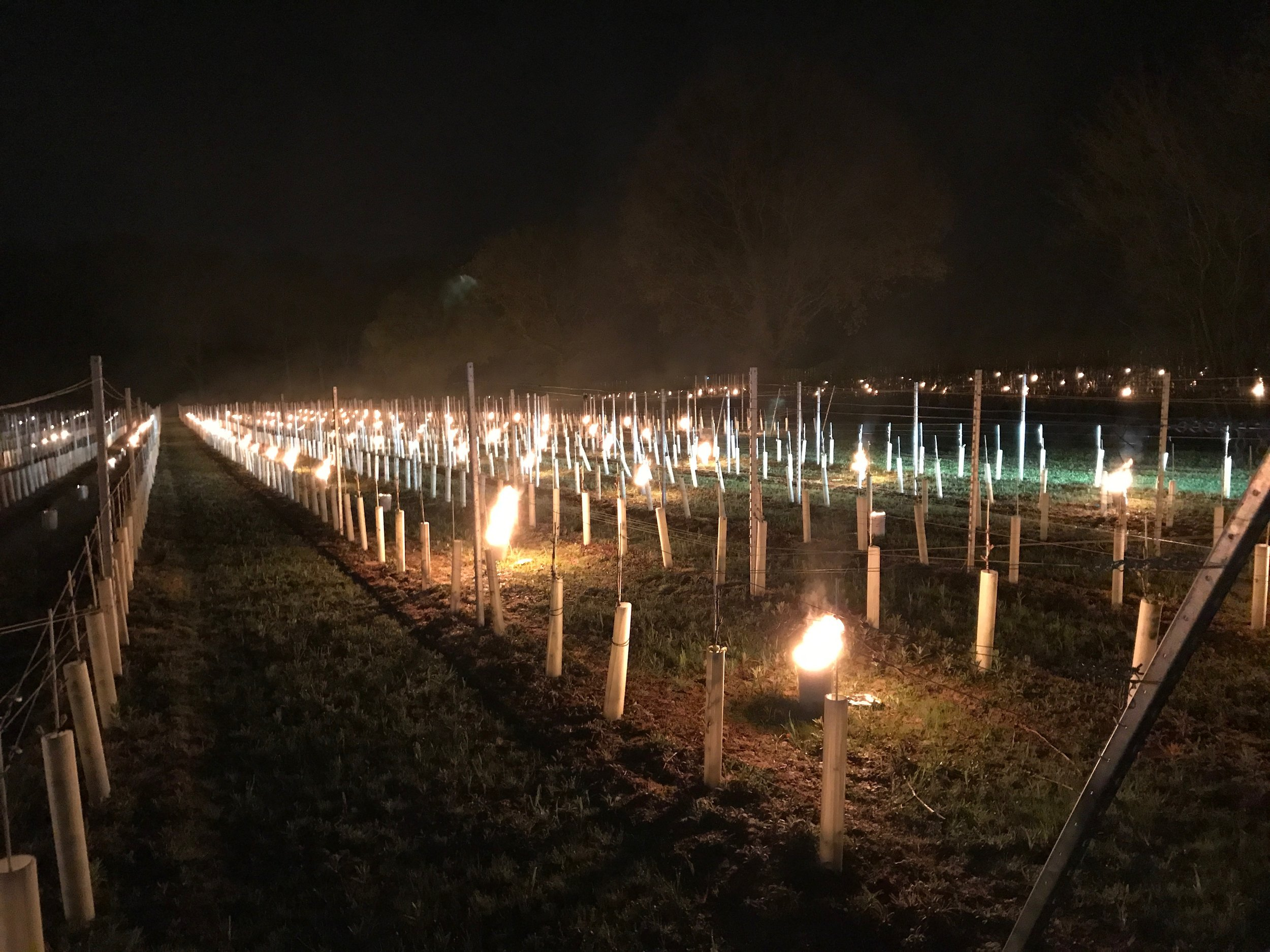 When temperatures threatened to drop sub-zero, we were out in full force lighting bougies to mitigate any frost damage to the vines.