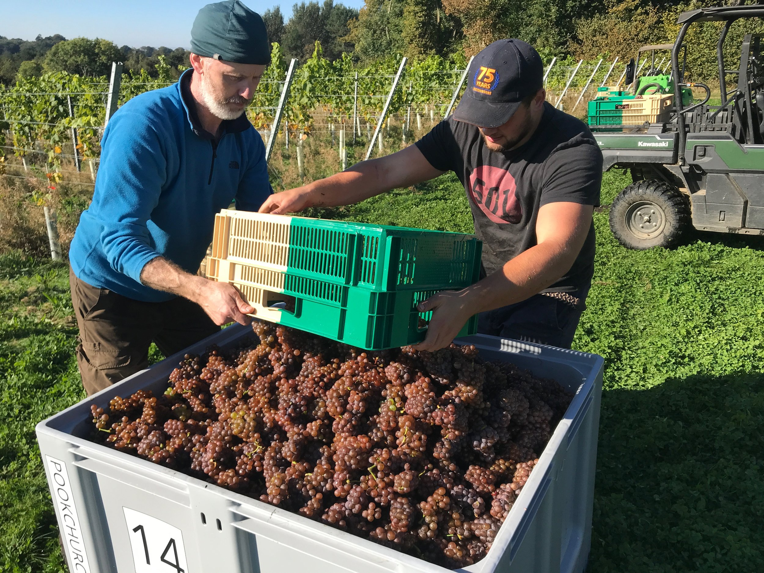 Pinot Gris harvest gets started