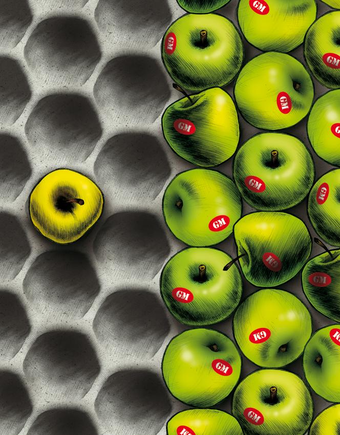 GM Apples