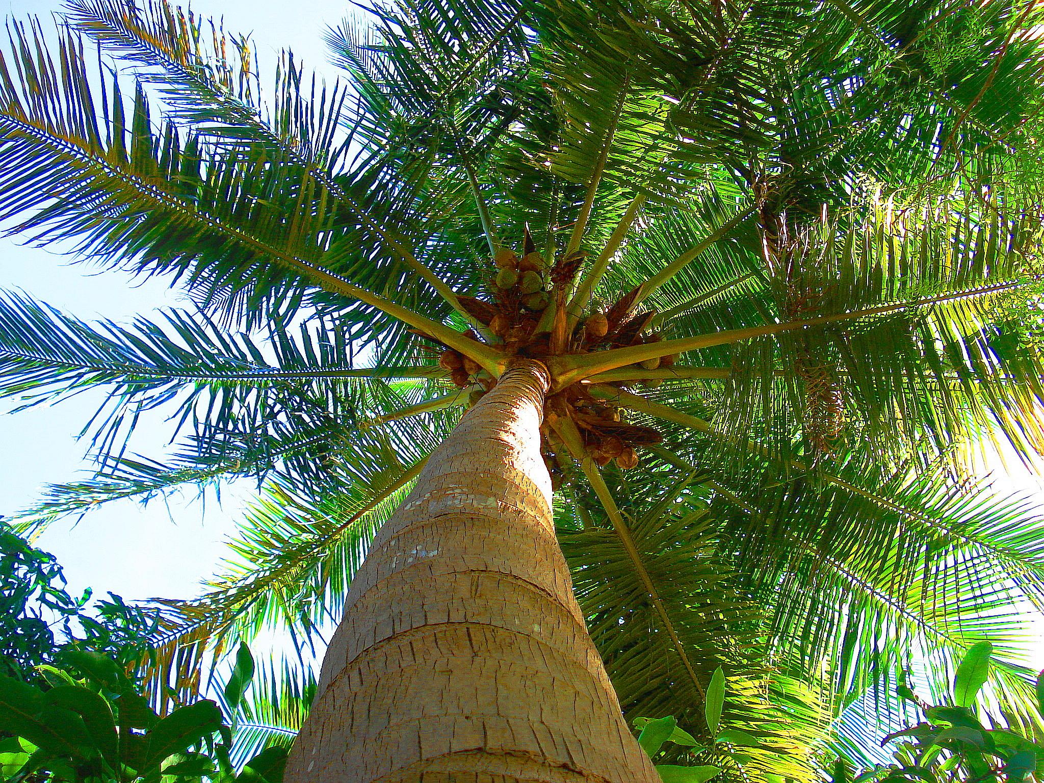 Coconut Oil : Moisturise!