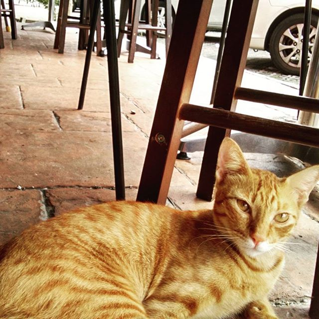 Street cat cafe #2 #catagram #cat #kucing #halalcatshampoo #halal #lovehalal #petgrooming #meow #cats #catsofinstagram #streetcat