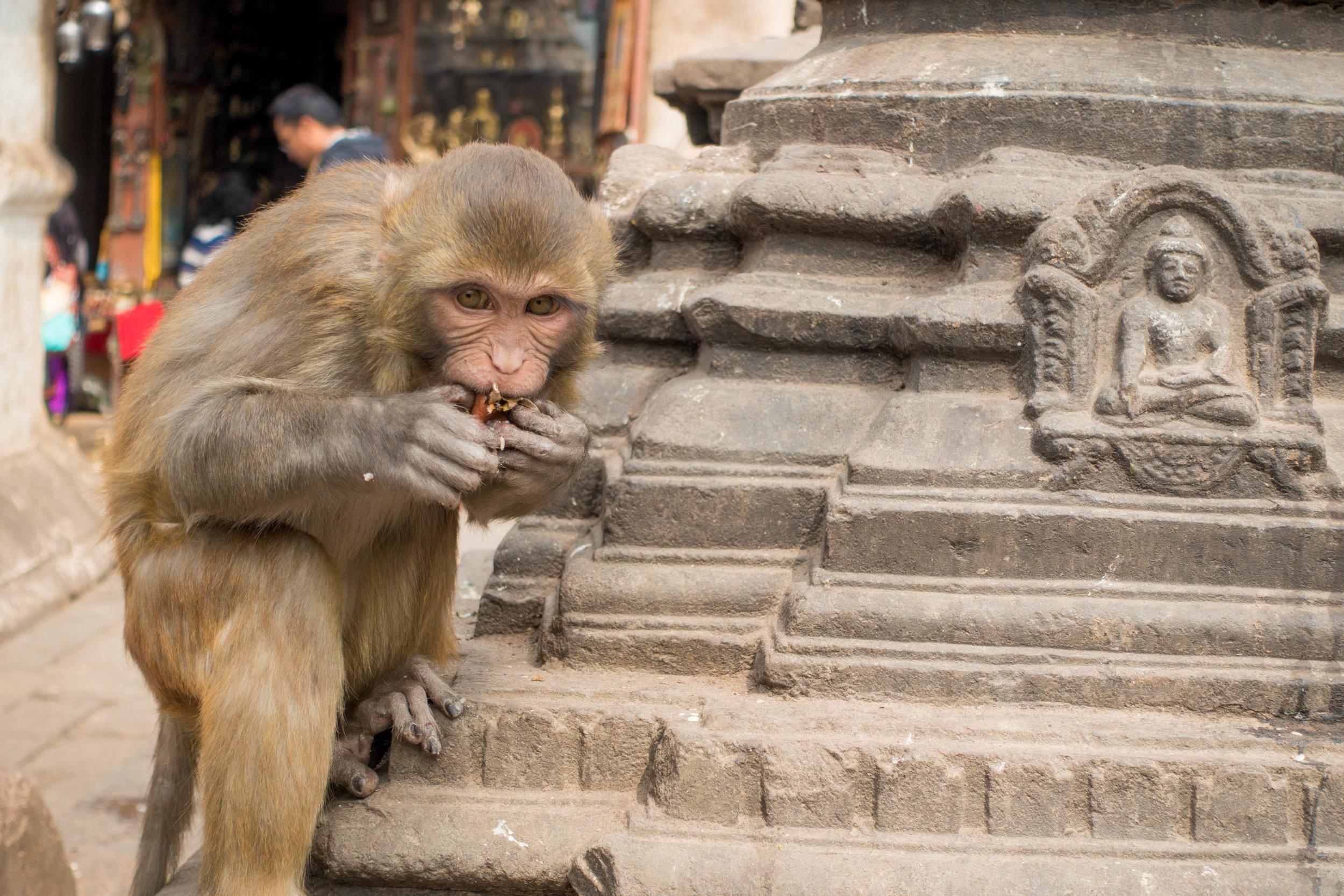Kathmandu, Nepal. Shot on point-and-shoot (Sony RX100M3).