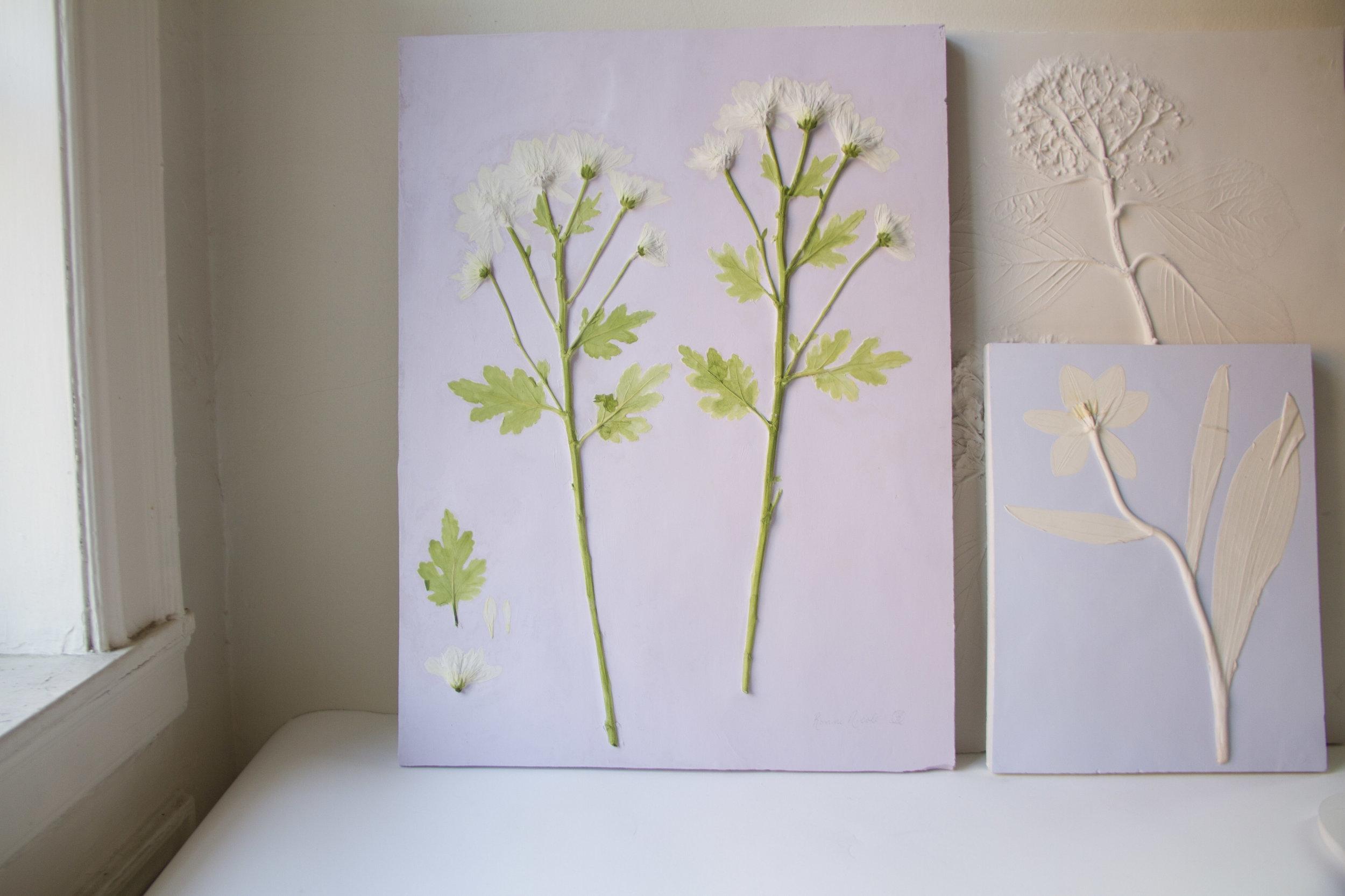 Chrysanthemum - Mums 01 - 03 -