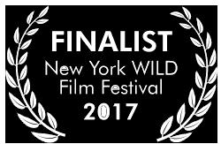 New York Wild.png