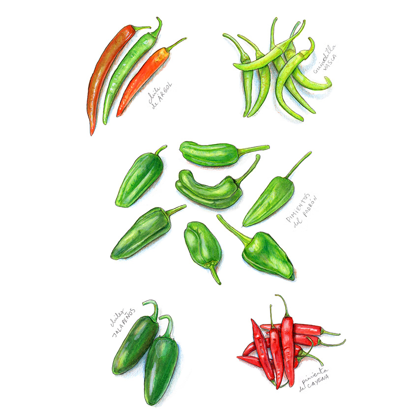 Spicy Peppers Illustration