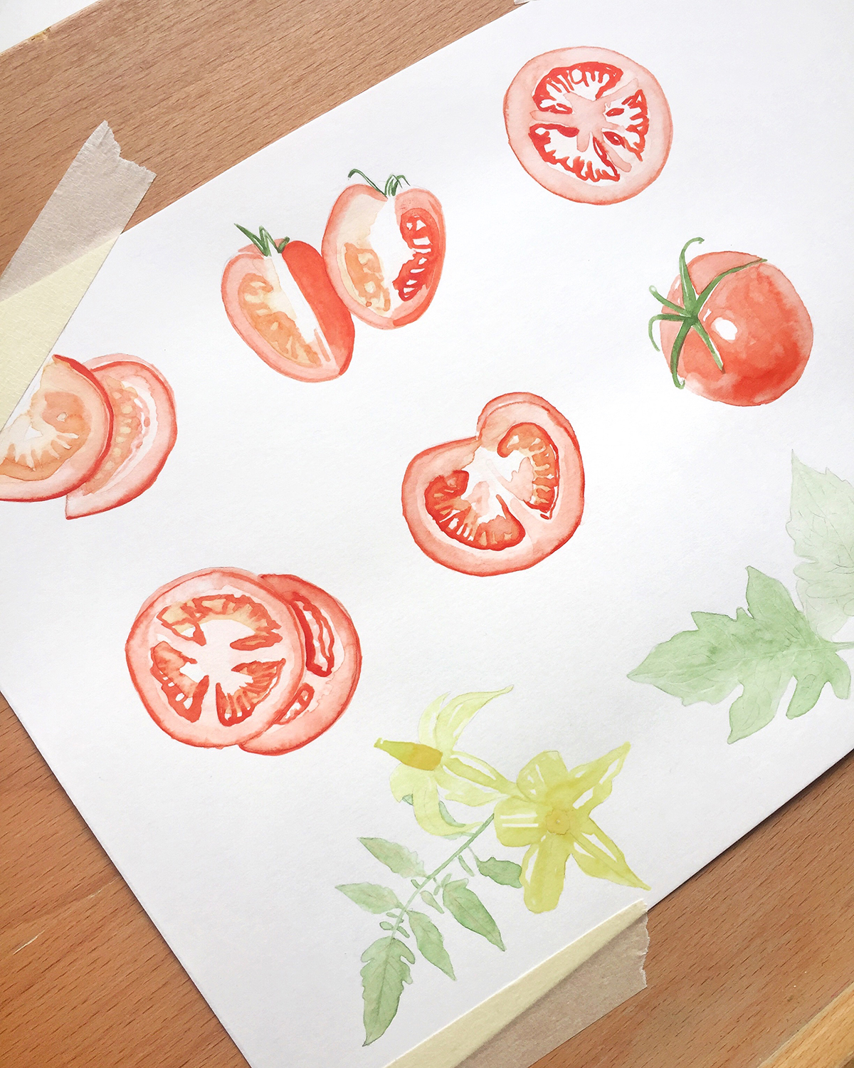 Process pictures of tomatoes illustration. 2019 © Miriam Figueras