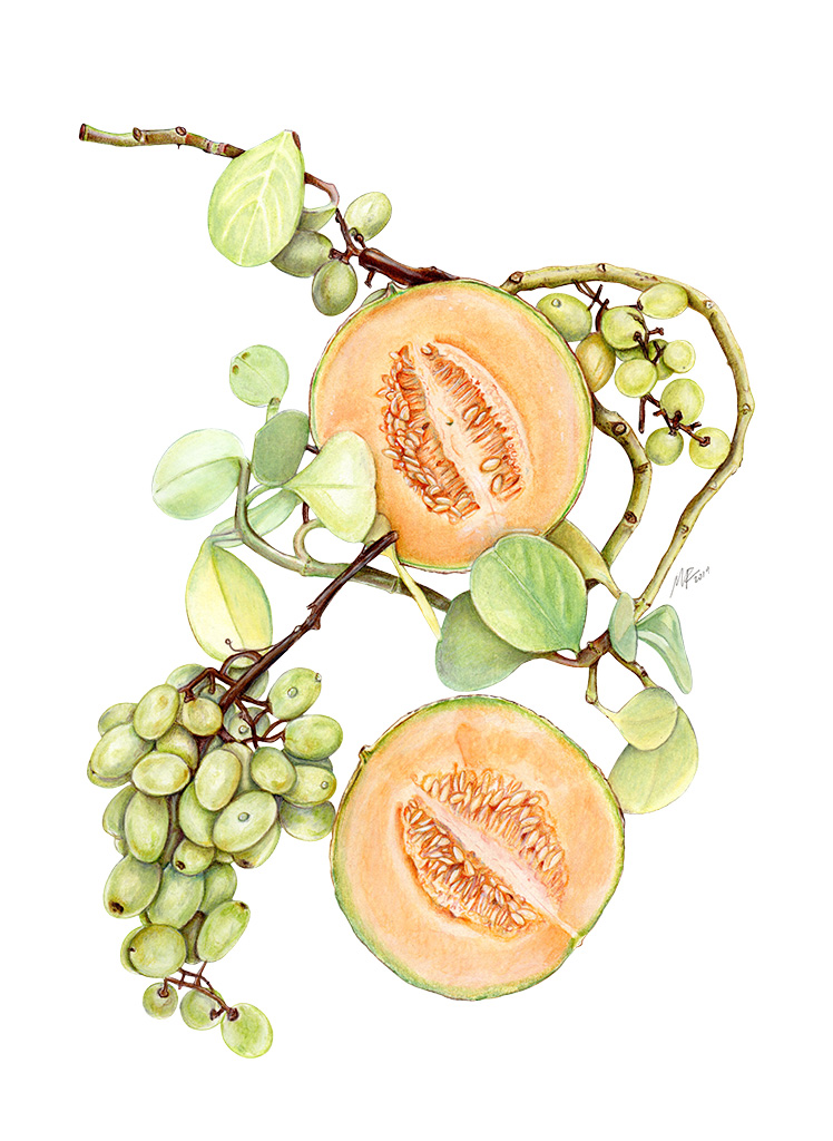 Cantaloupes and Grapes