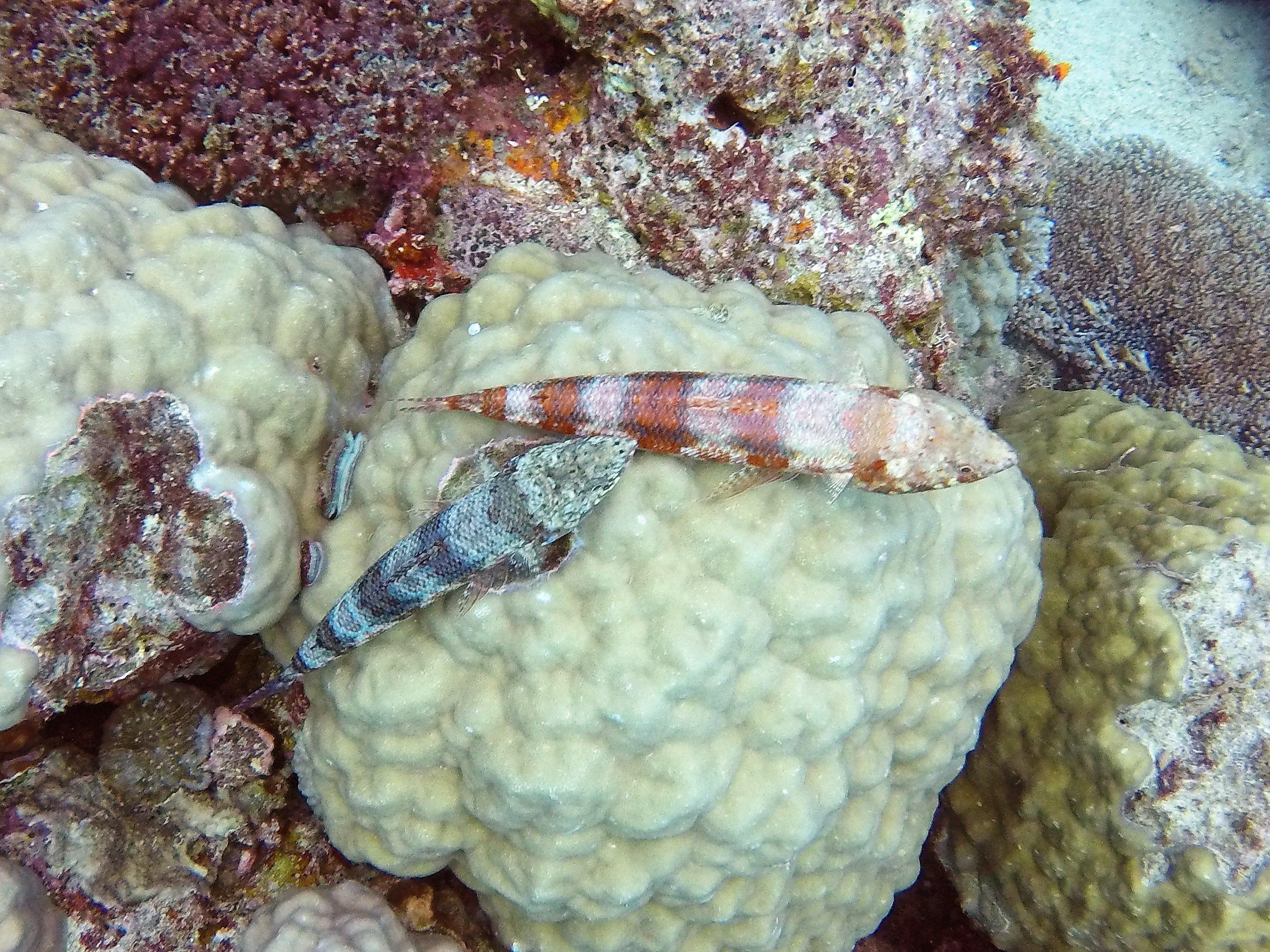 Vanuatu Dive 163.JPG