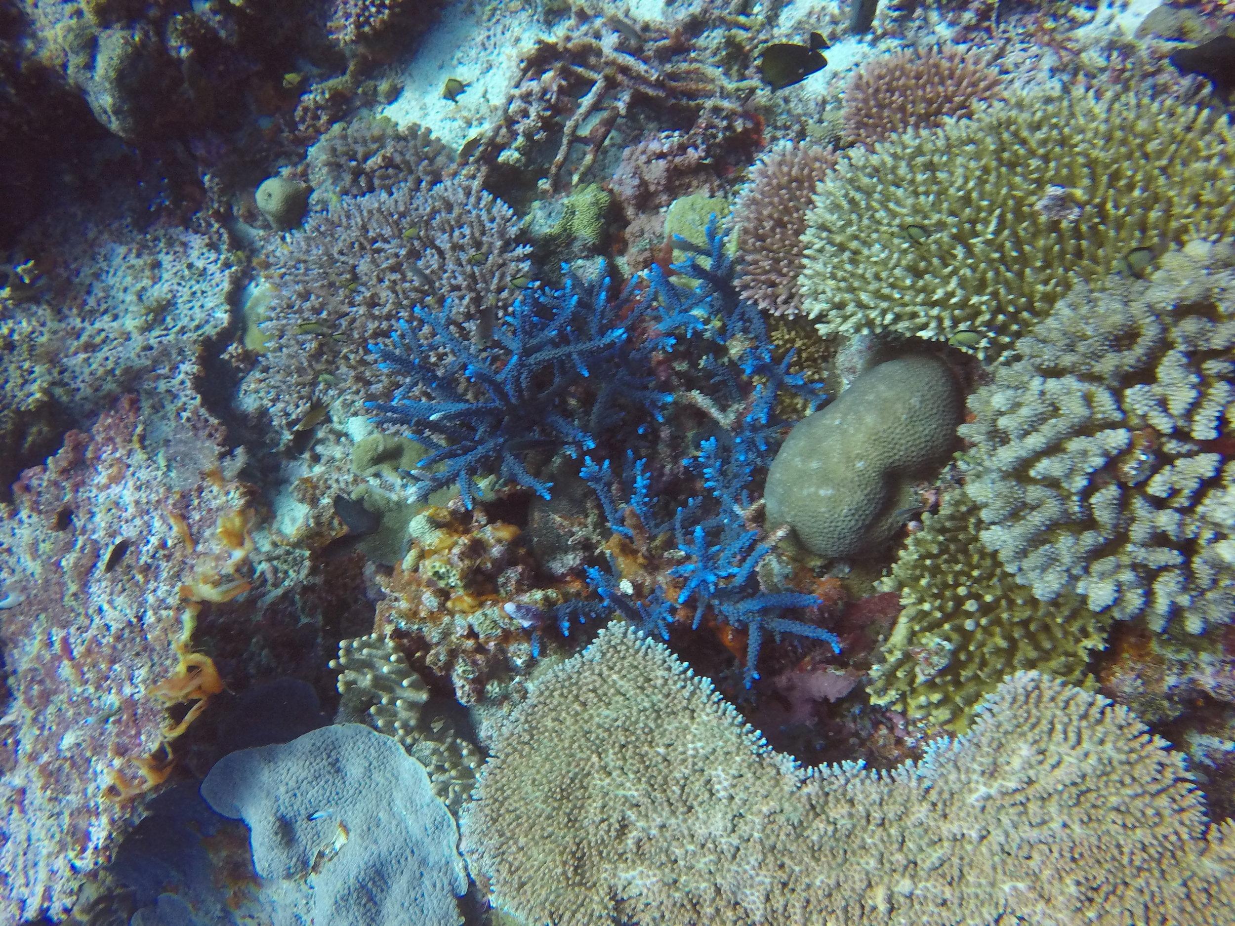 Vanuatu Dive 180.JPG