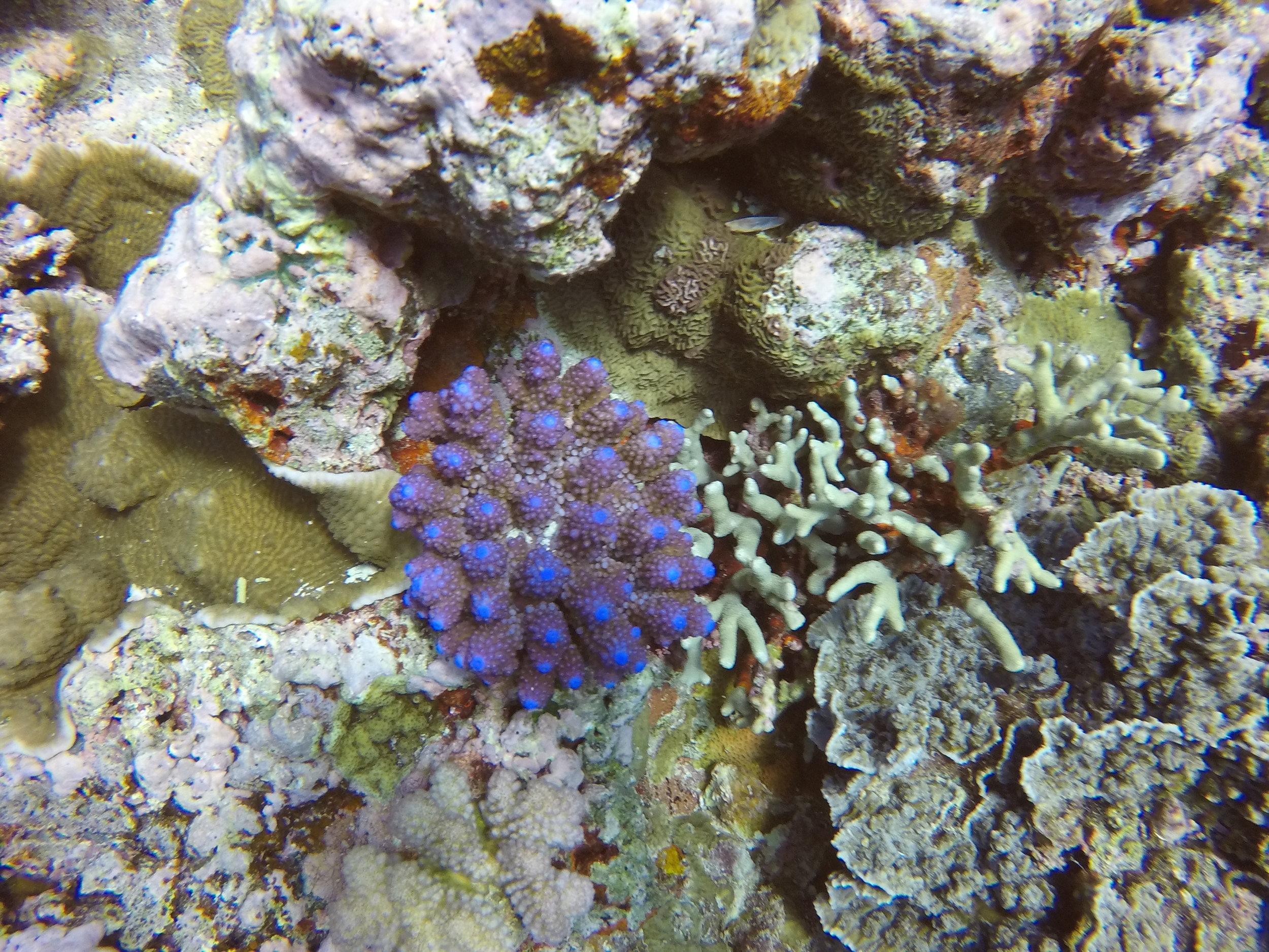 Vanuatu Dive 220.JPG